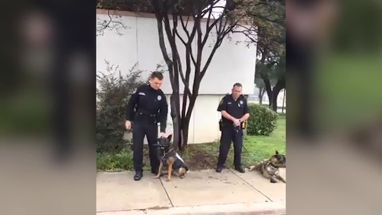 Police dog attacks officer on a call. Another officer had to kill it, Texas cops say