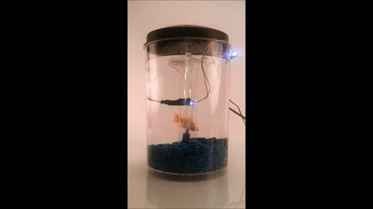 AT Series 2 Pin LED starring A Fish Called Wanda