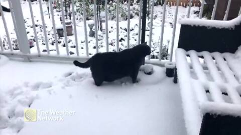 25-POUND CAT VENTURES OUT INTO SNOW, QUICKLY REGRETS DECISION