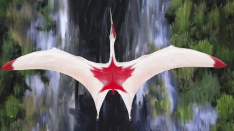 """FROZEN DRAGON"" DINOSAUR LOOKS LIKE CANADIAN FLAG DISCOVERED IN ALBERTA, ARTIST RENDERING"