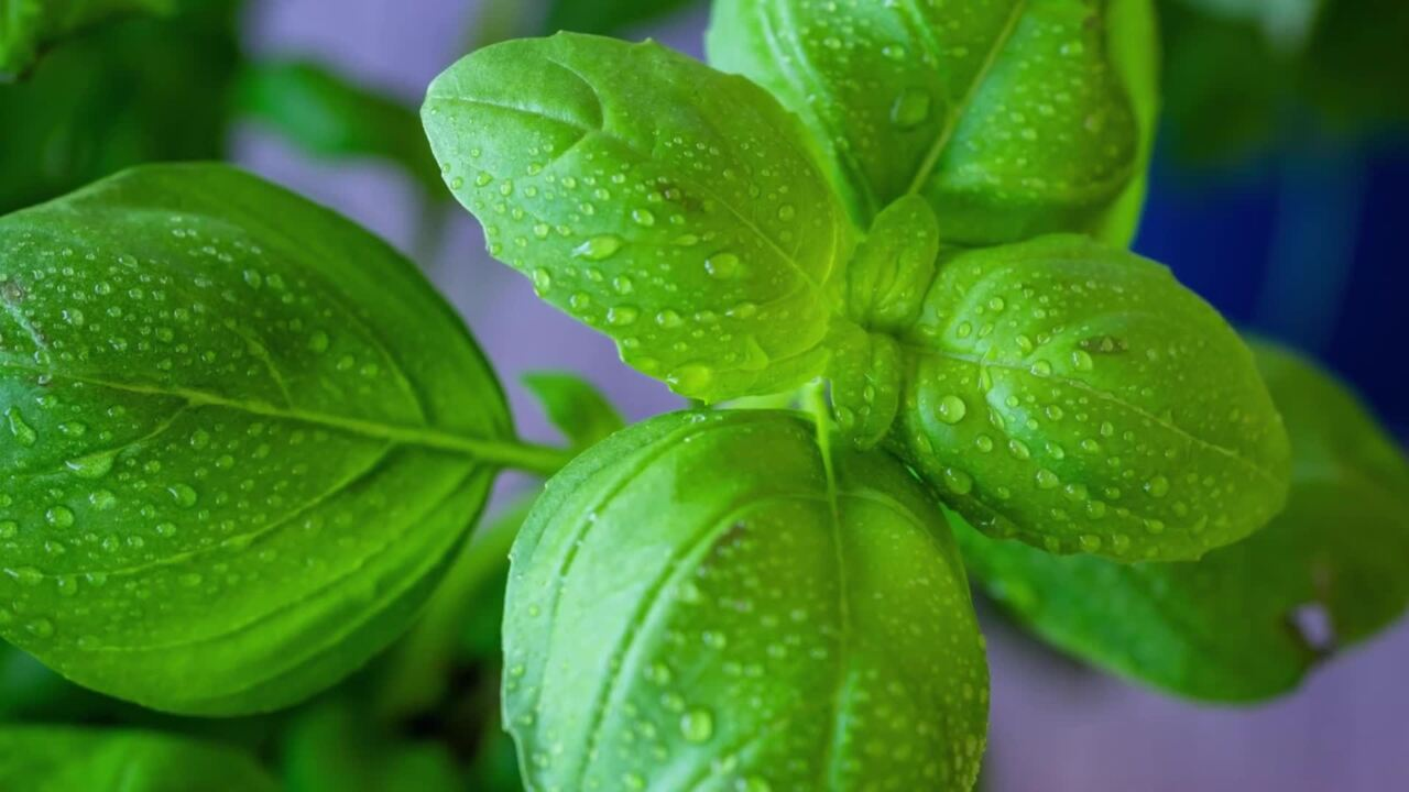The Best Way to Store Fresh Basil   EatingWell