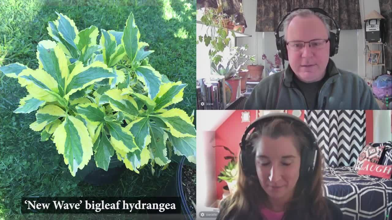Episode 76: Wish List Plants for 2021