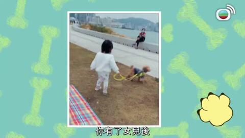 狗狗診療所-Doggie Training Camp