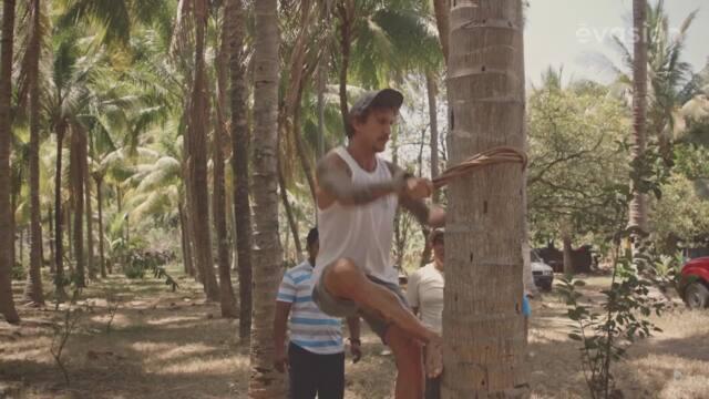 La cueillette de noix de coco