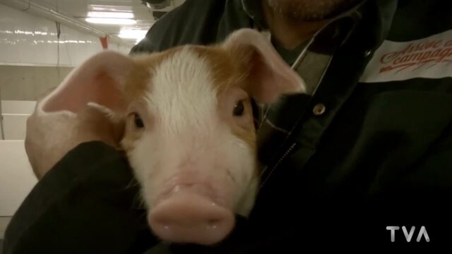 Visite des élevages Charbonneau