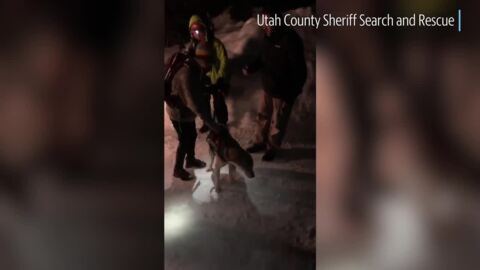 A dog fell into a 40-foot-deep cavern of ice and snow. Watch him reunite with owner