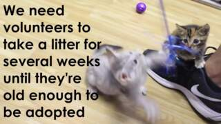 These kittens really need foster caregivers, Sacramento animal shelter says