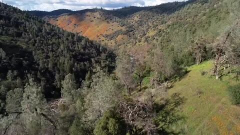 Fly over poppy fields in El Dorado County