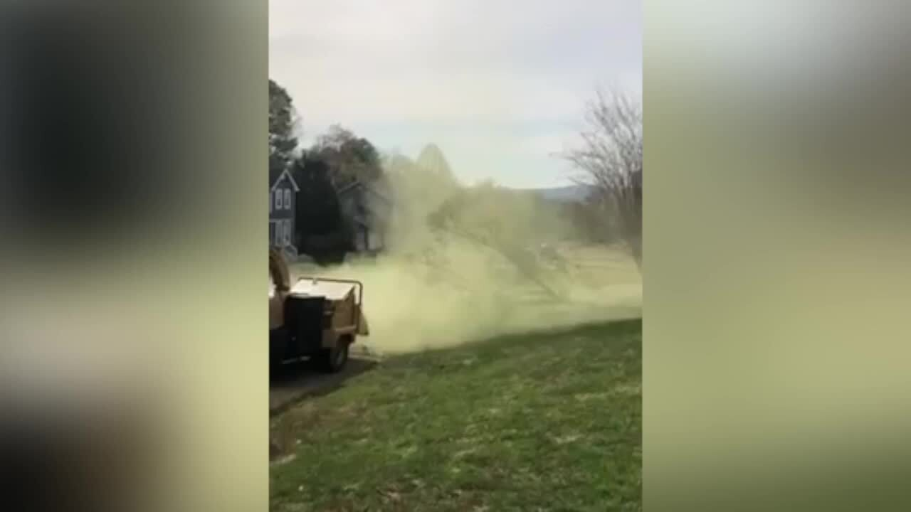 'Pollen bomb' explodes as 30-foot tree falls on lawn in Tennessee, video shows
