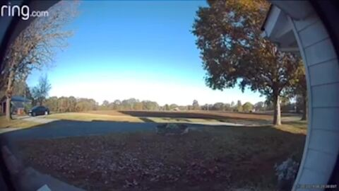 Unwelcome guest shows up on the lawn — but this cat wasn't having it, NC video shows