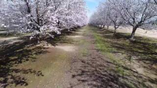 Soar above Fresno County's Blossom Trail - Clip