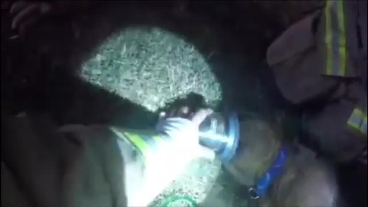 Watch Fresno firefighters save an unconscious dog from a burning house over the weekend