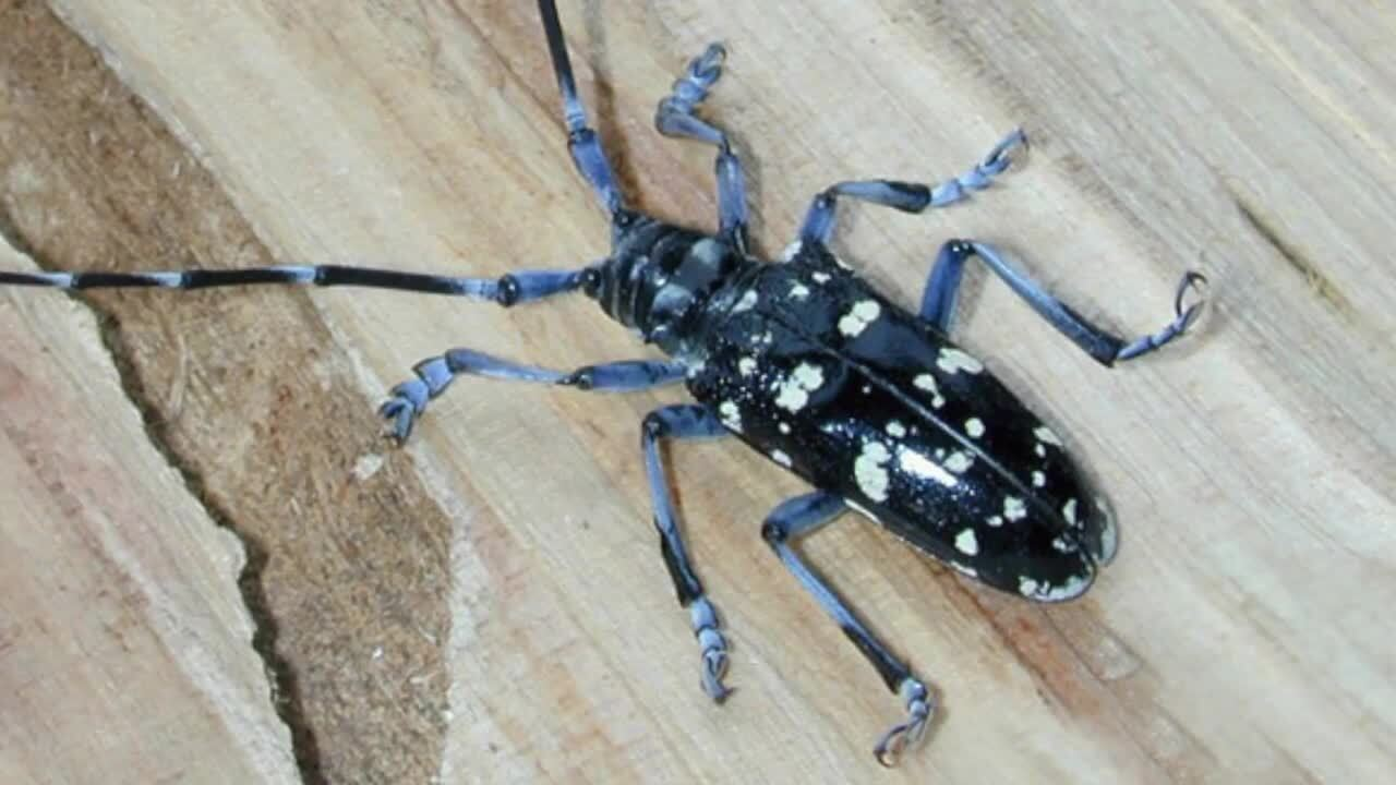 Washington state wants you to look out for these bugs