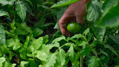 Take a look around Strong Roots Organic Farm