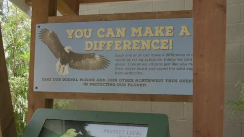 Fly - and nest - like an eagle at new Northwest Trek bald eagle exhibit