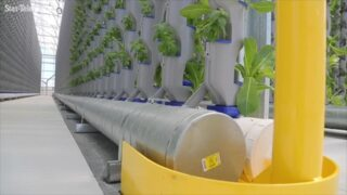 Trying to feed the world with vertical farming