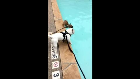 No diving in the pool? Not for this Texas puppy