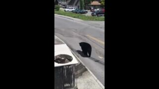 Kentucky woman captures black bear's stroll through downtown Gatlinburg