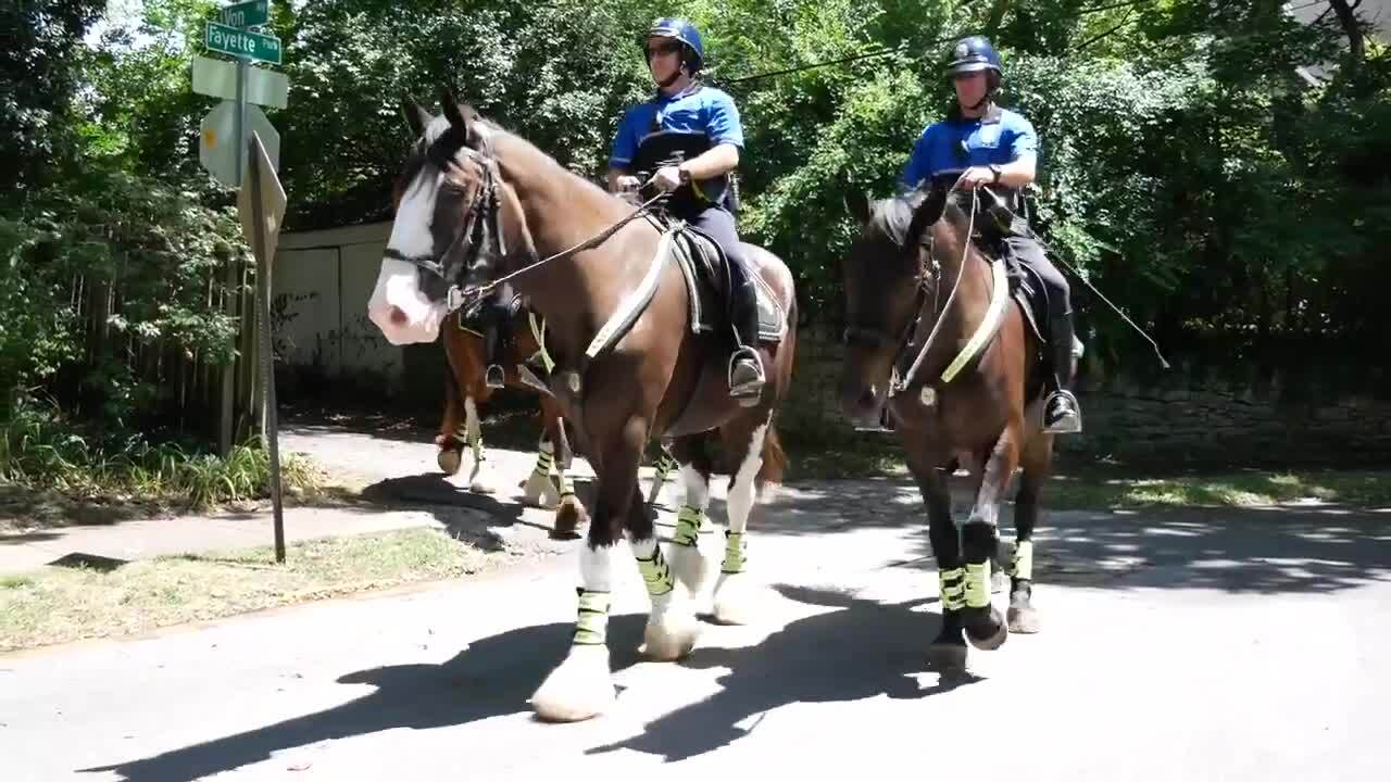 Lexington police got two Clydesdales that had never been ridden. Look how far they've come.