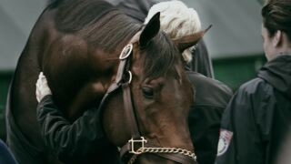 Keeneland's gritty new TV commercial takes viewers behind the scenes