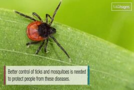 Illnesses on the rise from mosquito, tick and flea bites