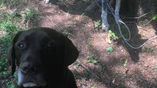 Fort Mill service dog shot and killed
