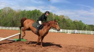 No horsing around at annual equestrian skills show at ASC Greenway in Fort Mill, SC