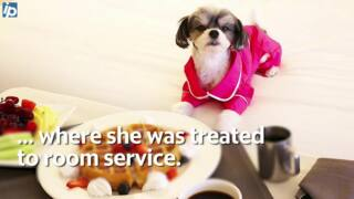 How Instagram-famous dog 'Tinkerbelle' spent her Hilton Head vacation