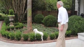 Henry McMaster's dog Mac is the star of the Governor's Mansion
