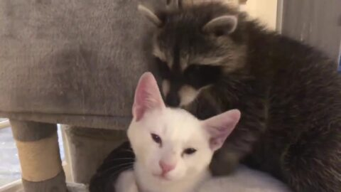 'They love each other': A cute animal video to celebrate the weekend's arrival