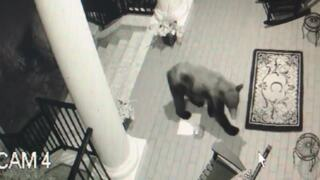 See a black bear hang out on a front porch in Carolina Forest