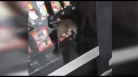 Rat spotted in vending machine