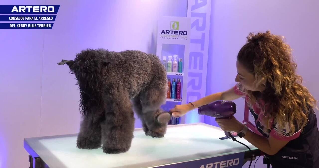 Thumbnail for Arreglo del Kerry Blue Terrier
