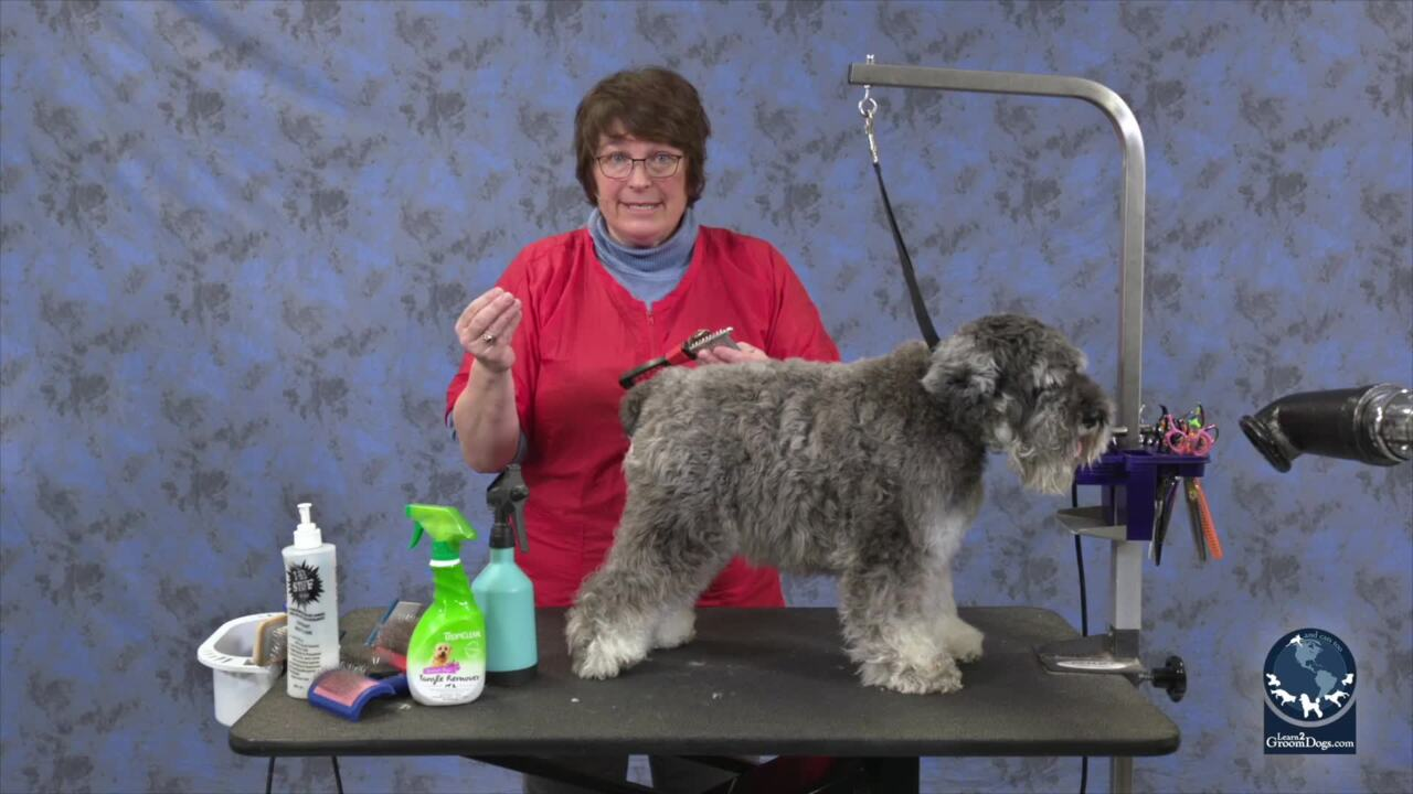 Thumbnail for Safe and Gentle Dematting Techniques on a Miniature Schnauzer (Part 1 of 3)
