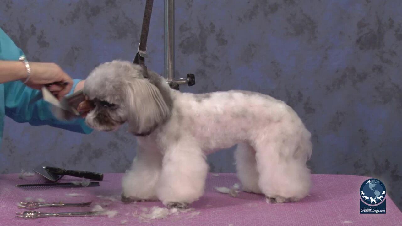 Thumbnail for Spotlight Session: Trim Muzzle Area on a Shih Tzu Poodle Mix