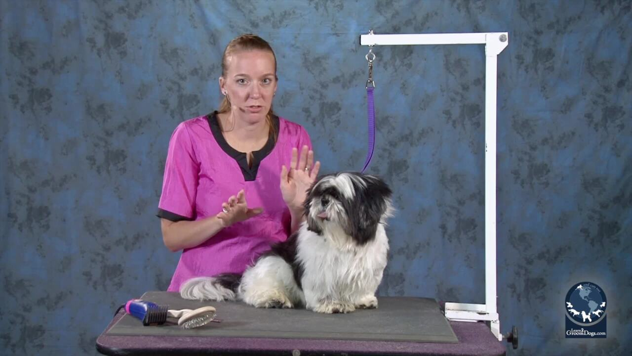 Thumbnail for Communicate with Pet Parents About Matted Dog