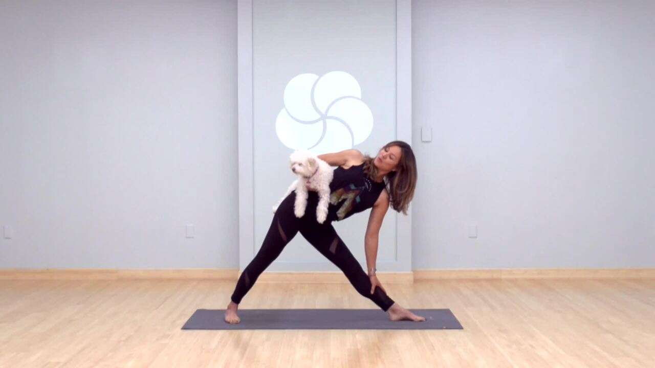 Hip Openers with Your Pup