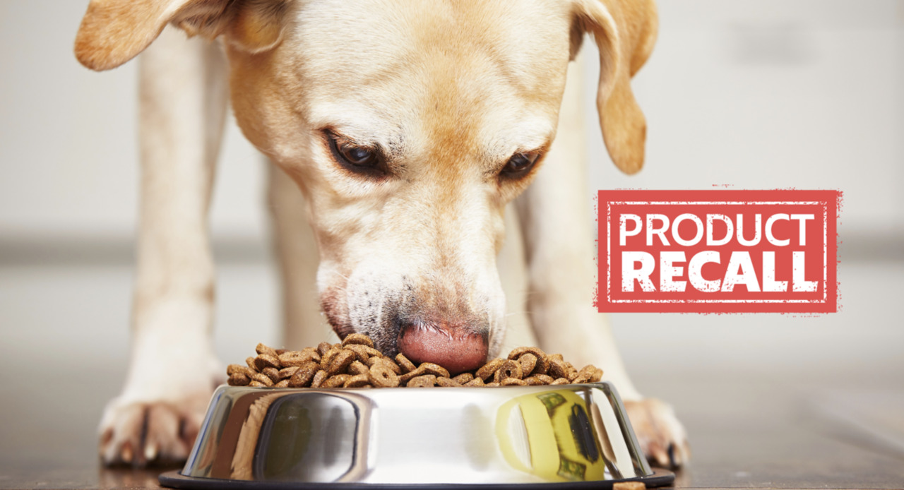 pet food brand issues voluntary recall over salmonella fears