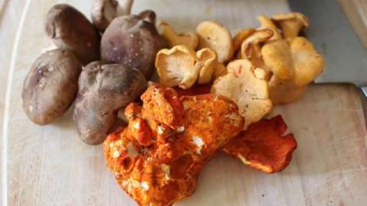 creamy wild mushroom ragout video