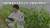 中国的粮食安全暂无近忧,但面临长期挑战