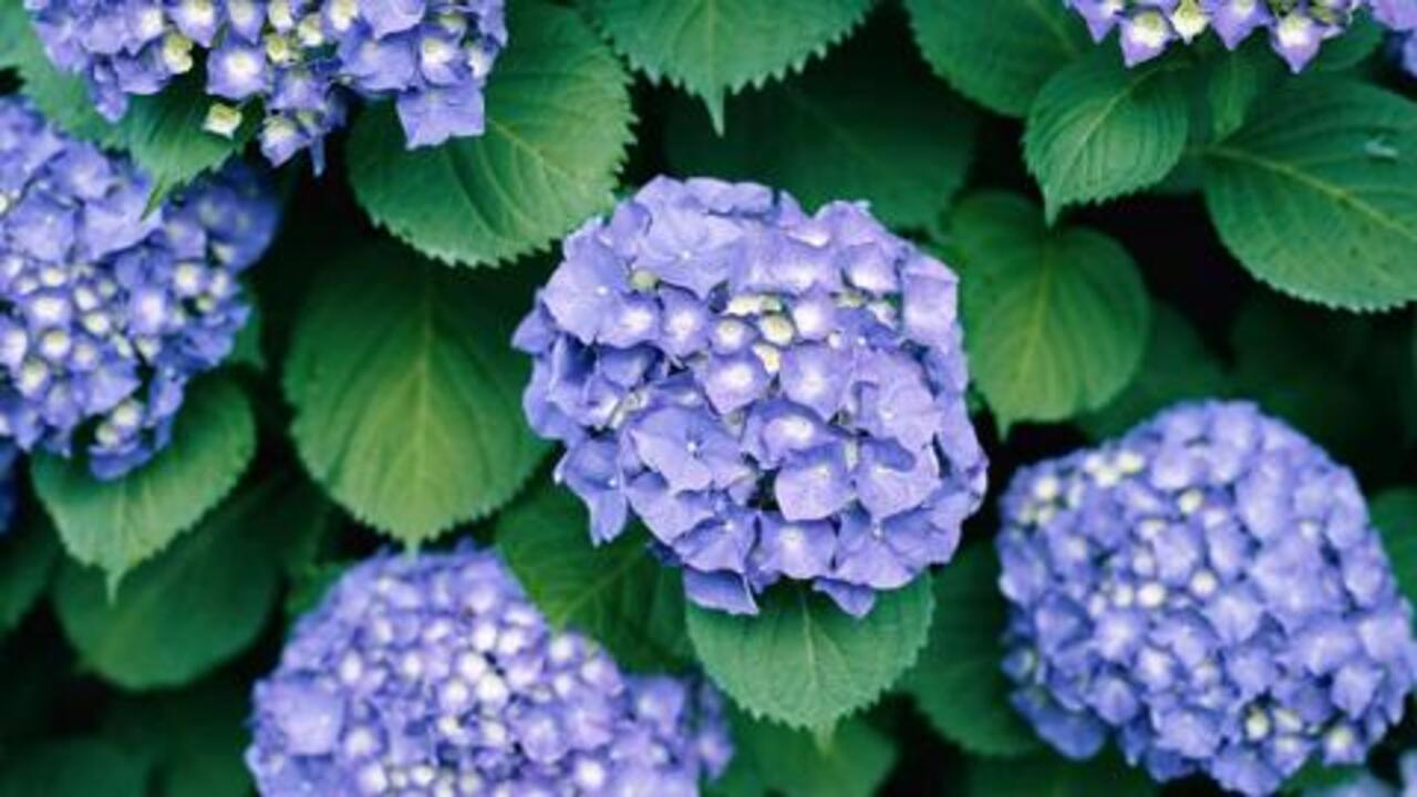 Smart Gardening Tips for Allergy Sufferers