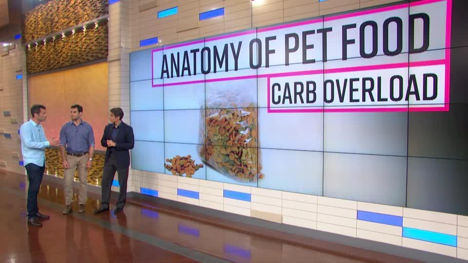 How Obesity Affects Your Pets