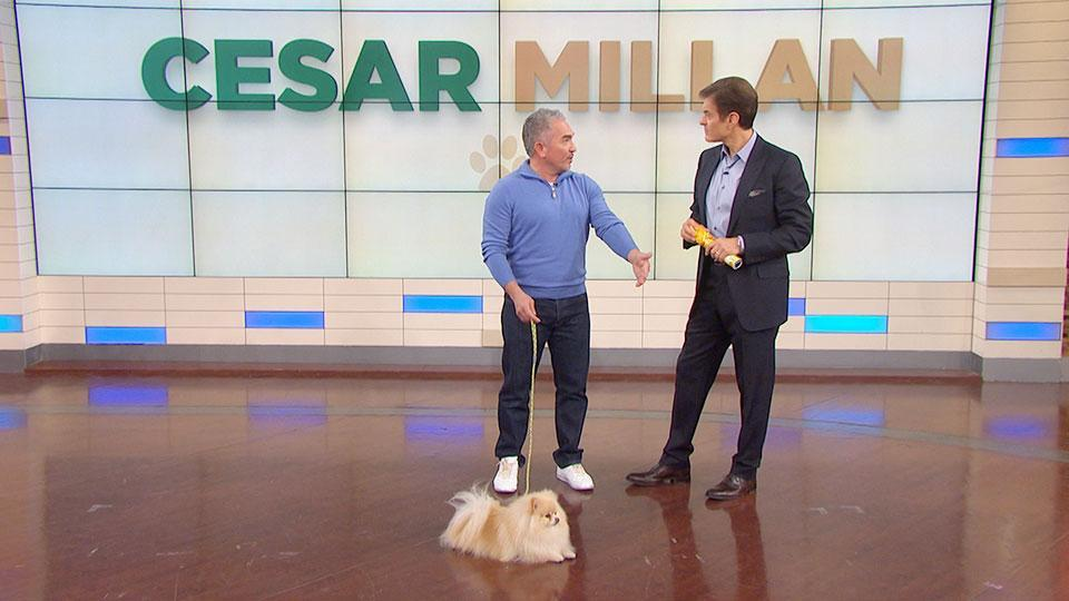 Cesar Millan Trains the Worst Dog in America