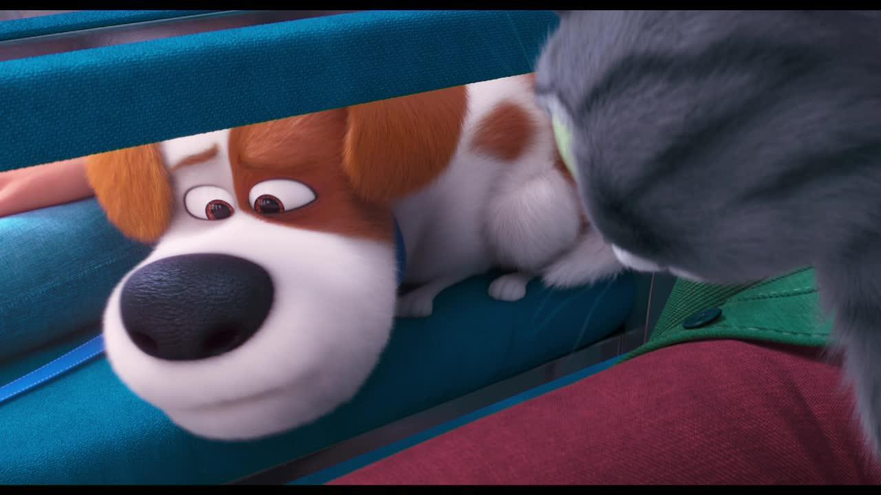 Play trailer for The Secret Life Of Pets 2