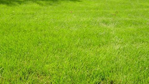 Scotts Turf Builder Zoysia Grass Seed /& Mulch and Wizz Spreader
