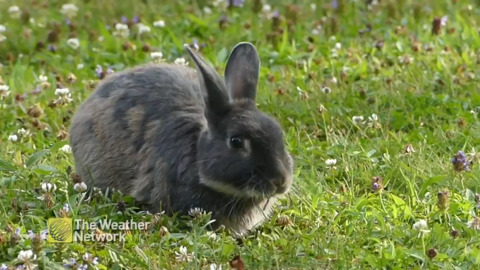 BUNNY MUNCHING IN A FLOWER PATCH
