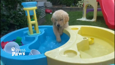 THE PERFECT DOSE OF PUPPY CUTENESS TO START YOUR DAY: PRESS PAWS
