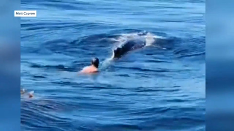 FISHERMAN HELPS FREE WHALE TRAPPED IN A LOBSTER NET