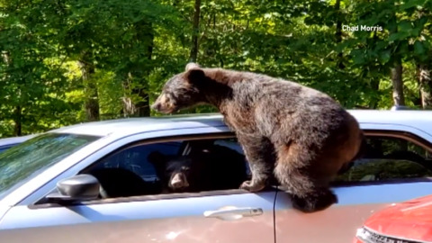 MAN GETS WHAT HE ASKS FOR, FOUR BEARS BREAK INTO HIS VEHICLE