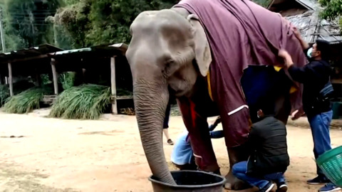 ELEPHANTS GET CUSTOM SWEATERS TO FEND OFF COLD WEATHER